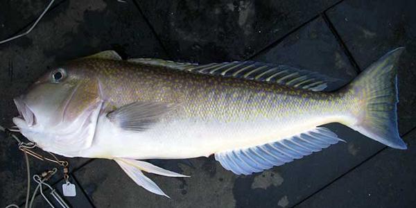 Kamu Harus Tahu: 5 Jenis Ikan Ini Sebaiknya Tidak Dikonsumsi Berlebihan